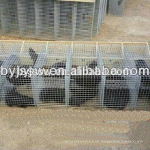 Jaulas de visón de acero inoxidable / jaula de zorro y jaula de visón galvanizada