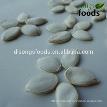 different types of seeds/Vegetable Seed/pumpkin seeds