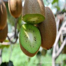 2011 china fresh kiwi