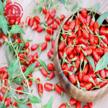 Wolfberry / Lycium Barbarum / Residu rendah Goji berry