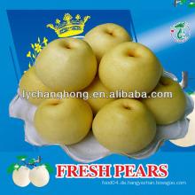Krone Birnen / Huangguan Birne / asiatische goldene Birnenfrucht aus China