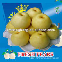 Crown Pears/Huangguan Pear/ Asian Golden pear fruit from China