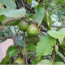 Дерево тунгового масла и полиуретановый пол