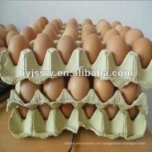 Reciclar cartón de huevos de papel