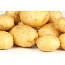 2016 Новый Свежий Урожай Картофеля