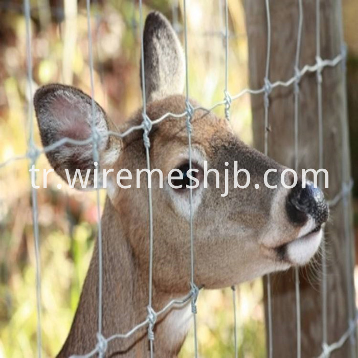 Woven Wire Deer Fence