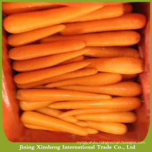 New organic fresh carrots hot sale