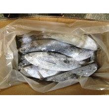 Novo fornecimento de peixe congelado Bonito para venda