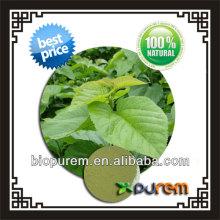 morus alba leaf extract