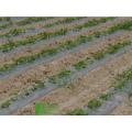 Personalizar alto desempenho na China biodegradação de filme plástico Pvc
