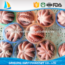 Gefrorene Stil Blume Oktopus