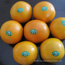 Export Standard Qualität von frischem Nabel Orange
