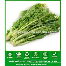 NCS08 Gaochan haut rendement guangzhou choy sum graines pour l'agriculture