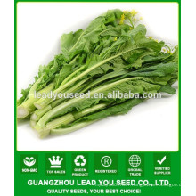 NCS08 Gaochan high yield guangzhou choy sum seeds for agricultural