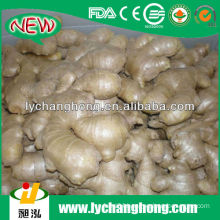 2014 Chinese Air Dry Ginger