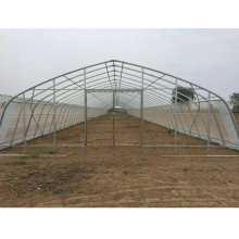Low cost Galvanized Steel Frame Plastic Film Cover Tunnel Greenhouse