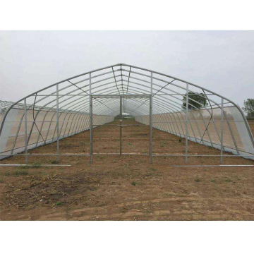 Kos rendah Galvanized Steel Frame Plastic Film Cover Tunnel Greenhouse