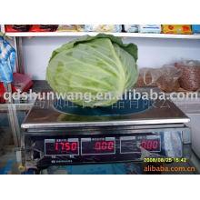 2011 chinese fresh round cabbage 2.0kg