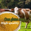 Tierfutterzusatz gelbes Maisglutenmehl für Tierfutter