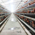 Automatic Chicken Cage Farm for Layers and Broilers