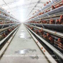 Ferme automatique de cage de poulet pour les couches et les poulets de chair