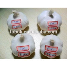 5cm Fresh Pure White Garlic