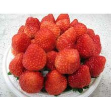 HACCP frozen strawberry IQF strawberries