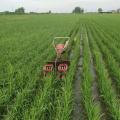 Riz paddy d'essence de machine de désherbeur de riz