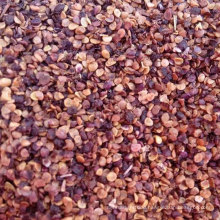 Planting High Quality Goji Berry Seedlings For Sale
