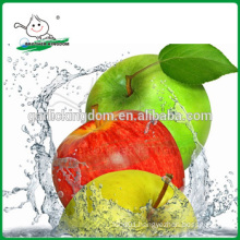 Green gala/Green apple from origin/New crop green apple