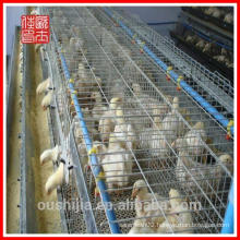 Wholesale Design layer chicken house/chicken house for sale