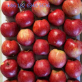 Unbagged Red Star Apple