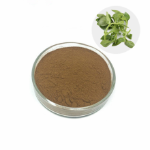 Hot Selling Pure Natural Andrographis Paniculata Extract Andrographolide Powder