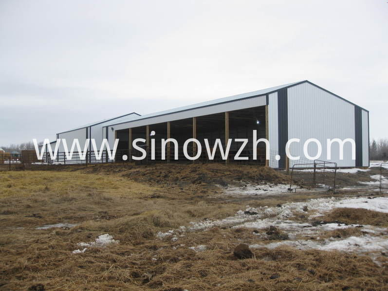steel structure cow shed (1)