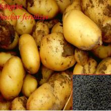 High Quality Agro Grade Organic Fertilizer
