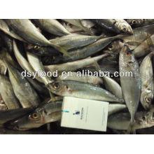 price frozen horse mackerel W/R BQF FISH