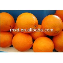 frische orange Namen alle Früchte