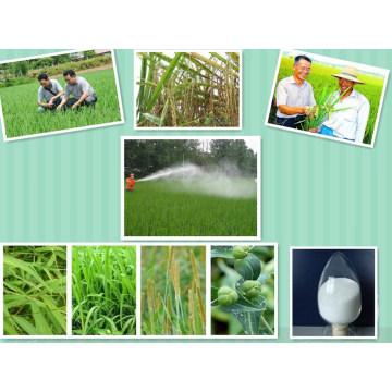 Atrazine é um Herbicida M80% Wp Herbcide Assassino de Erva Daninha