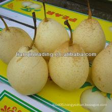 ya pear 2012 price