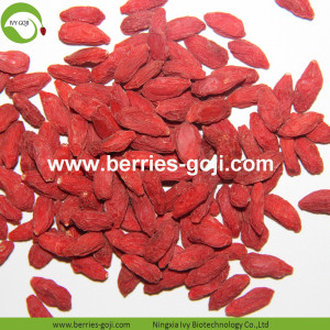 Partihandeln Nutrition Healthy Low Pesticide Goji Berry