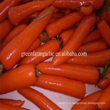 Type de culture commune et carotte de style frais