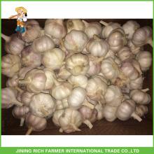 Jinxiang chinesischen Großhandel frischen normalen weißen Knoblauch 5.5CM Mesh Bag in Karton für Brasilien