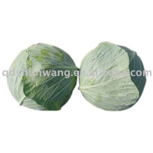 fresh cabbage with good quality
