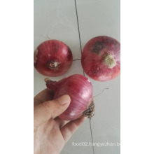 lowest price fresh red onion egypt