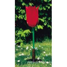 Tulip Flower...