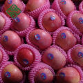 Chinesischer goldener Apfel frischer Apfel für neue Saison zu verkaufen