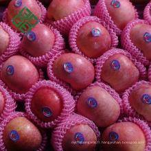 pomme d'or chinoise pomme fraîche pour la nouvelle saison à vendre