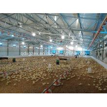 Geflügelfarm, Hühnerhaus für Broiler (CH-41)