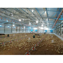 Poultry Farm, Chicken House for Broiler (CH-41)