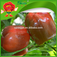 Factory direct supply Fresh red bell pepper price